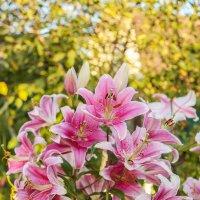 Люблю цветы :: Александр Шмалёв