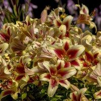 плотное цветение :: gribushko грибушко Николай
