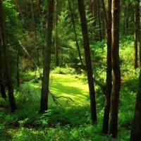 Тайны леса :: Nina Yudicheva