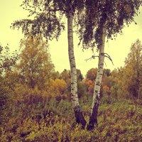 Осень :: Андрей Леднев