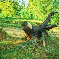 Красоты леса :: Anastasiya Ageeva