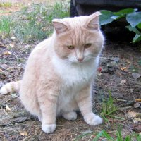 Эх , жизнь моя ...кошачья ... :: Мила Бовкун