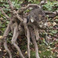 Котёнок на коряге :: Aнна Зарубина