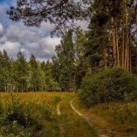 Дорога в осень 2 :: Андрей Дворников