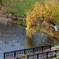 Осень пришла :: Борис Гуревич