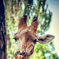 В Алматинском Зоопарке :: Вероника Галтыхина