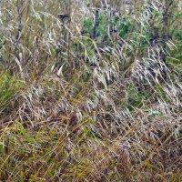 Осенние травы печальны :: Валерий Талашов