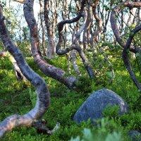 Природа острова :: Валерий Князькин