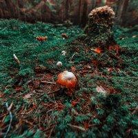 грибы :: Захар Кузин