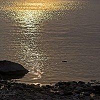 Отражение солнца :: Светлана Воробьёва