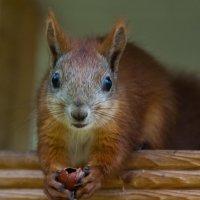 Да орешки всё грызёт... :: Илья Костин