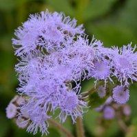 поздний цветок :: сергей