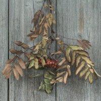 Осень... :: Наталья