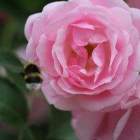 Цветочный хоровод-579. :: Руслан Грицунь