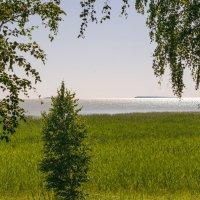 озеро Чаны :: Павел Павел