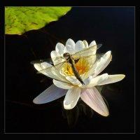 Озерные флора и фауна :: Валерий Талашов