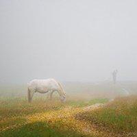 Лошадь :: Игорь Волосянкин
