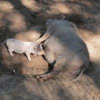 Мама с малышом :: Вера Щукина