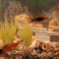 Подводный мир :: Olga Photo