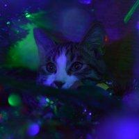 Кот и новый год. Архипка :: Алина Леликова