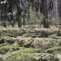 Вечерняя тишина осеннего леса :: Оксана Пестова