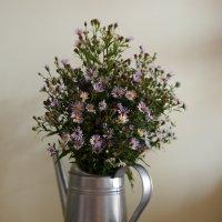 Полевые цветы :: Илья Кантемиров