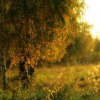 Осенний лес :: Ольга Кондратова
