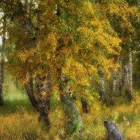 Осень... :: Ольга Кондратова