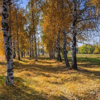 Осенняя :: Александр Тулупов