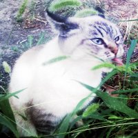 Эмоциональный кот :: Владимир Ростовский