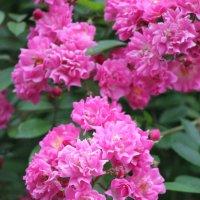 Цветочный хоровод-588. :: Руслан Грицунь