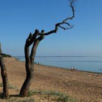 Всё то же дерево..)), если не в июле так хоть в сентябре.. :: tipchik