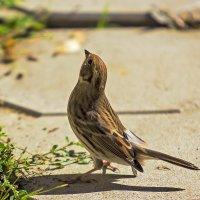 Пташка :: Анатолий Иргл