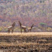 Национальный парк Мкомази (Танзания, сентябрь 2015) :: Сергей Андрейчук