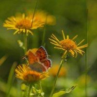 Бабочки, цветочки... :: Альмира Юсупова