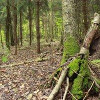 Во лесу ))) ... :: Колибри М