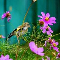 птичка - любитель флористики :: Александр Прокудин