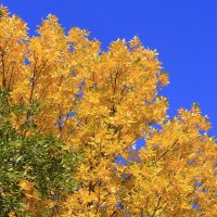 Про осень,небо и краски :: Татьяна Ломтева