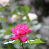 Цветочный хоровод-593. :: Руслан Грицунь