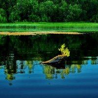Топляк на озере :: Валерий Талашов