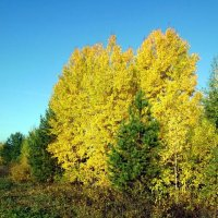 Жёлто-зелёная осень :: Николай Туркин