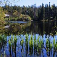 Игуменское озеро :: Ольга (ОК)