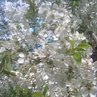 весна :: Олег Кирилюк