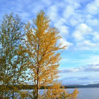 Уж небо осенью дышало... :: Ольга