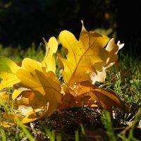 Осень... :: Andy Bayt