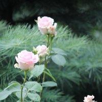 Цветочный хоровод-597. :: Руслан Грицунь