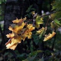 Первые признаки Осени...)) :: VADIM *****