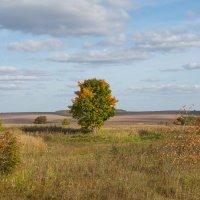 Осенние ракурсы :: Роман Царев
