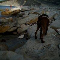 Пса на пляже... :: Olga Kramoreva