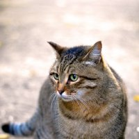 Осенний котейка :: Артур Рыжаков